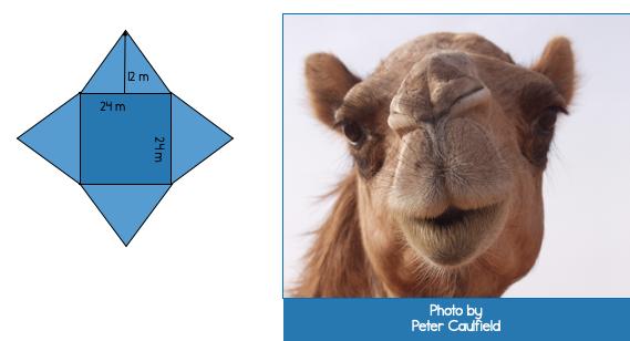 Fun Geometry: Animal Nets